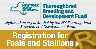 Registration for Foals and Stallions