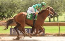 NY-Bred Winners In New York: Daily NY Horse Racing Summary