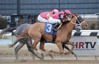 Ny Bred Winners In New York Daily Ny Horse Racing Summary