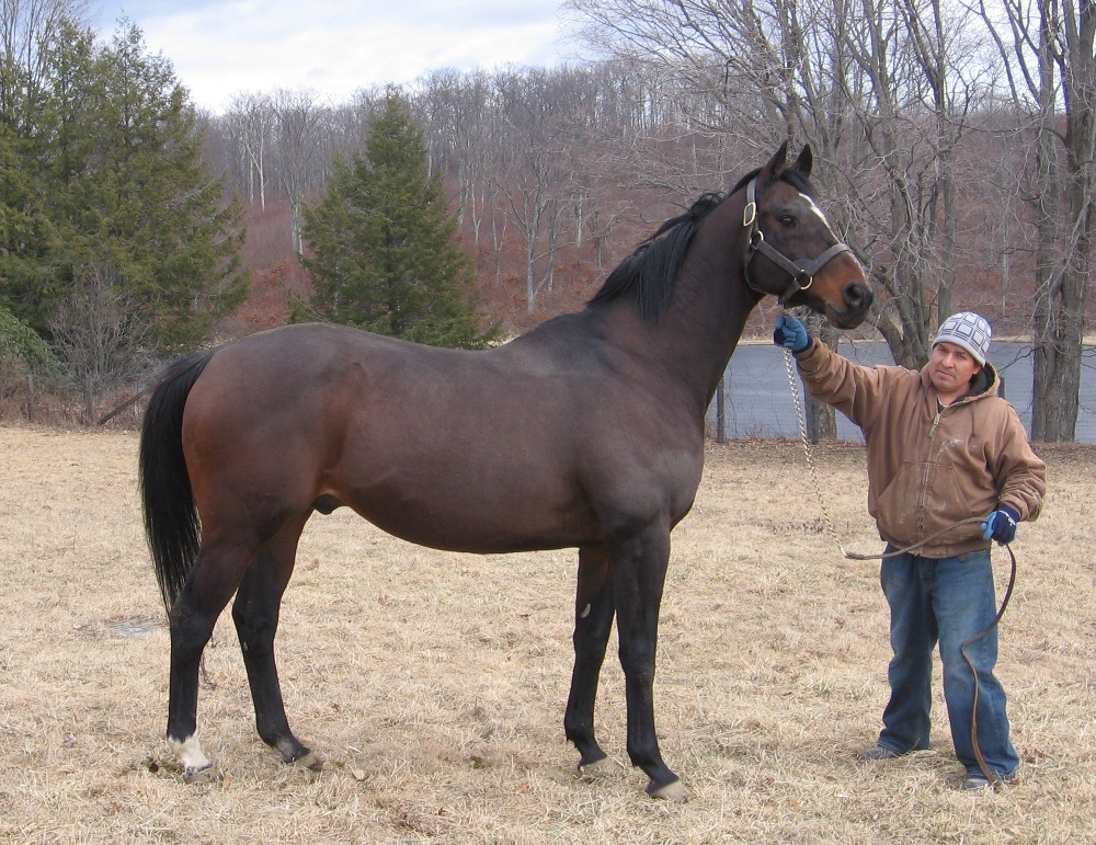 New York Sire Eltish Succumbs To Neurological