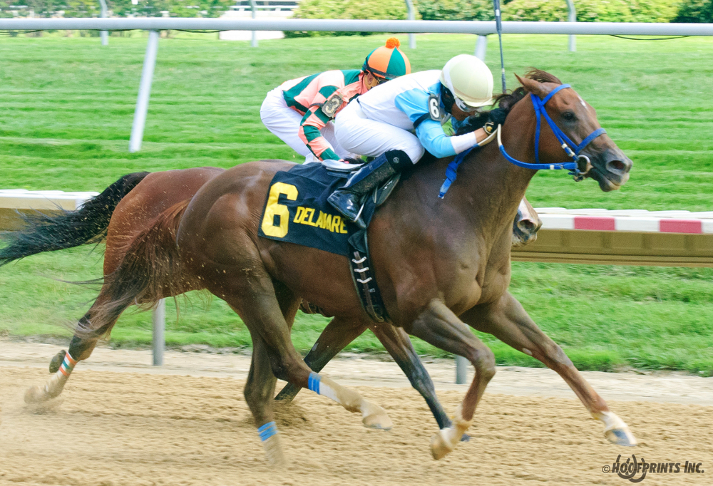 New York Thoroughbred Breeders | Thoroughbred OwnerView ...