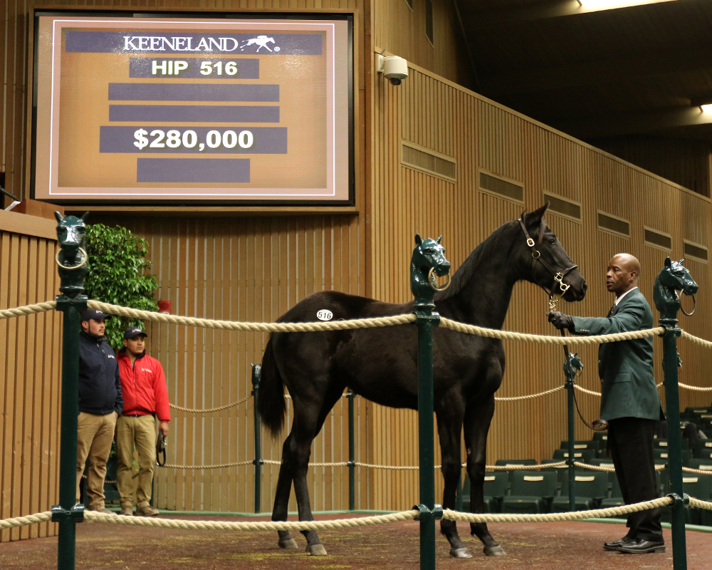 New Yorker By Shanghai Bobby Tops Keeneland Book 1